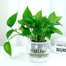 small plants for office. desk small indoor plants for office good best
