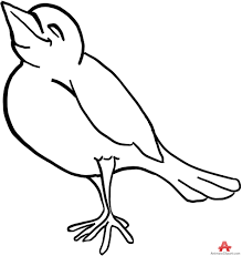bird clipart outline. Perfect Clipart Bird Throughout Clipart Outline