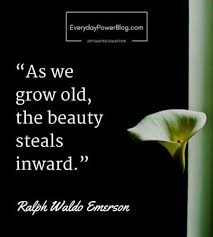 Beauty Of Life Quotes Best of 24 Beauty Quotes About Life The World And Nature Everyday Power