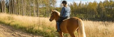 horse riding insurance specialist travel for horseriding horse rider insurance quotes 44billionlater
