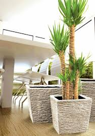 absolutely large decorative pot for outdoor beautiful indoor plant photo trend idea fresh cool uk
