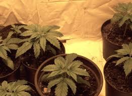 3 4 weeks old plants