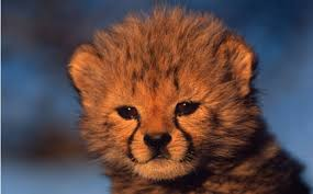 give a set of symbolic adoptions to support wwf s global efforts to protect wild s and their habitats show more
