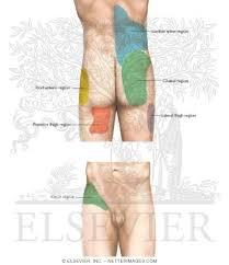 Pain Referral Patterns Unique Lumbar Zygapophyseal Joint Pain Referral Patterns