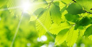 Meaning of The <b>Color</b> Green |