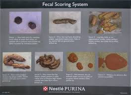 Fecal Scoring Chart Whats Your Dogs Poop Score Monicasegal Com