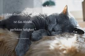 Motivierende Und Inspirierende Zitate Berühmter Menschen Katzen