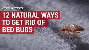 Download Best Way To Kill Bed Bugs  Pictures