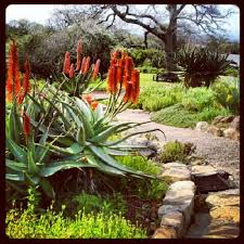 Small Picture 61 best South African Gardens images on Pinterest Plants Garden