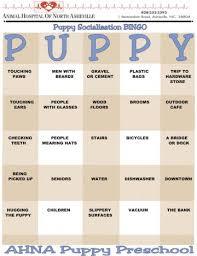 Socialization Ideas Bingo Animal Hospital Of North