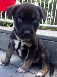 persuasive essay on animal abuse essay academic writing service  animal on emaze animal abuse information