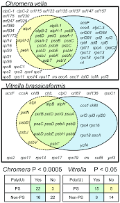 Venn Diagram Of Mitochondria And Chloroplasts The Total Distribution Of Poly U Sites Across Chromerid