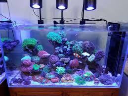 2017 best 2ft 120w nano reef aquarium led lighting malaysia uk for sps lps soft cs