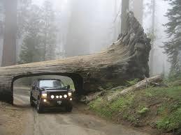 destination drive through trees