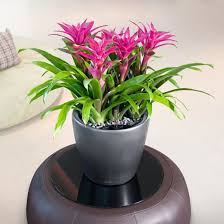office indoor plants. Get A Free Quote · Anthurium - Office Plants Indoor