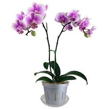 Orchid Identification What Kind Of Orchid Do I Have Repotme
