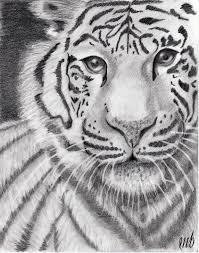 easy tiger pencil drawing.  Pencil Easy Tiger Pencil Drawings To Tiger Pencil Drawing
