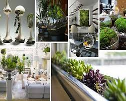 Small Picture Amusing Indoor Garden With Green Plant Decoration Ideas interior