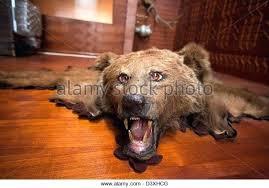 faux bear skin rug with head bear skin rug bearskin rug and stock image faux bear faux bear skin rug with head