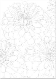 夏の花百日草ジニアの大人の塗り絵無料イラスト素材 無料