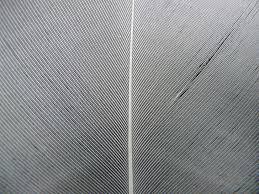 feather white filigree down plumage spring dress bird pattern