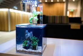 aquarium office. EcoQube Aquarium- Desktop Aquarium Kit For Betta Fish Office Decor And Home  Aquarium Office
