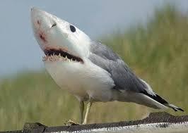 Картинки по запросу чайка прикол