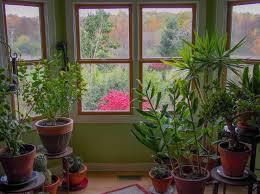 Trova tantissime idee per piante per interni resistenti. Piante Da Appartamento E Da Interno Scopri Le Piu Belle E Resistenti Casina Mia