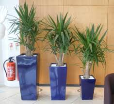 office plant displays. Tall Square Plant Displays In Stoke On Trent Office