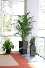 interior office plants. interior plants in medical facilities create a healthy feel living doctors office i
