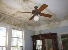Damp Mouldy Houses And The Link To Respiratory Problems