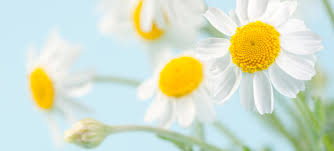 Image result for flowers fresh