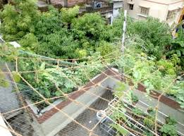 Office gardening Indoor Garden Garden Fastcashtransactioncom An Office Rooftop Garden In Kolkata West Bengal City Farmer News