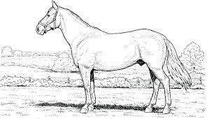 Realistic Horse Coloring Pages Stylish Design Realistic Horse