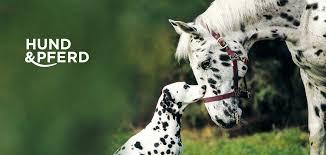 Home Vdh Messe Hund Und Pferd