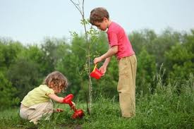 Image result for pictures plant a tree