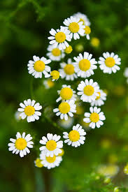 save these flower images as your mobile