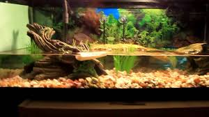 Turtle Tank Decor Similiar Slider Turtle Tank Designs Keywords