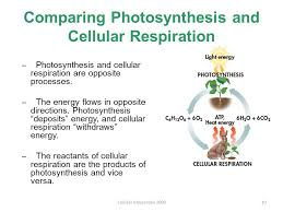 how does the equation for photosynthesis and cellular respiration beatlogcarnival compare photosynthesis and cellular respiration essay