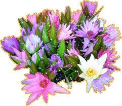 Картинки по запросу цветочки