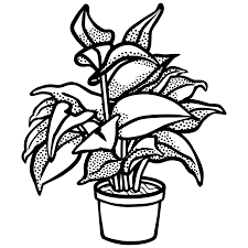 pot of chili drawing. Plain Drawing Svg Black And White Collection Of Potted Plants High Monochrome With Pot Of Chili Drawing W