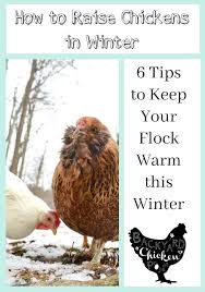 Five Reasons Why Owning Backyard Chickens Is For The BirdsHow To Keep Backyard Chickens