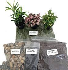fairy garden terrarium. Simple Garden TerrariumFairy Garden Kit With 3 Plants  Create Your Own Living Terrarium Inside Fairy R