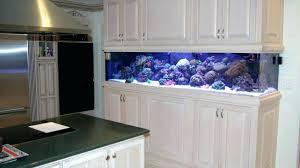 office fish aquarium office fish tank office divider gallon r aquarium cool office fish tanks office fish