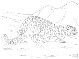 Snow Leopards Coloring Pages