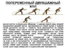 реферат Классификация лыжных ходов  Одновременные лыжные ходы реферат