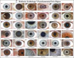 Iris Color Chart Iridology Chart Iris Eye Colors Chart Iridology Chart