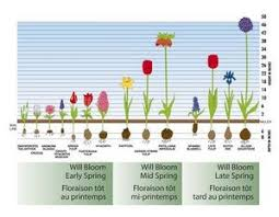 garden bulbs. Bloom Time Is The Of Year That A Bulb Will Bloom. This Could Be Early Spring, Mid-spring, Late Or Anytime In Summer. Garden Bulbs
