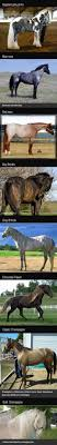best ideas about pretty horses horses pretty breathtaking horse colors