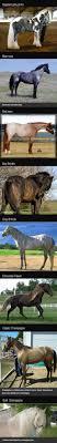 best ideas about pretty horses horses pretty breathtaking horse colors
